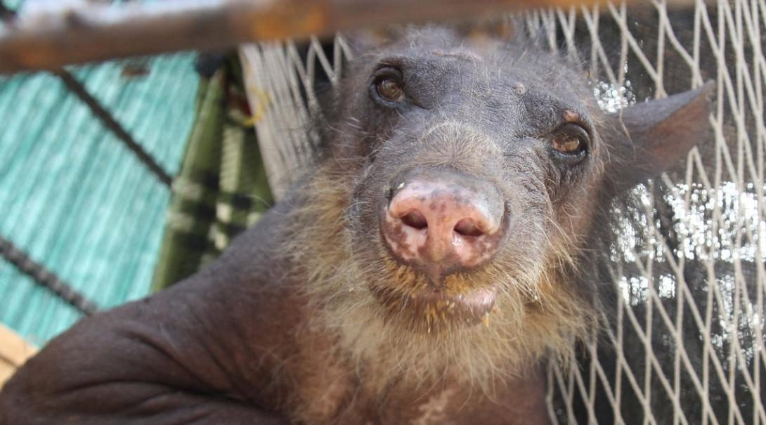 Durante tu voluntariado ambiental corto ayudarás a rehabilitar animales silvestres.